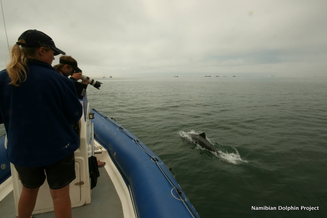 Photographing Heaviside\'s dolphins