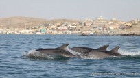 A rare sighting of bottlenose dolphins in Luderitz Bay
